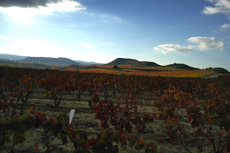 Does terroir matter in Spain's appellations?