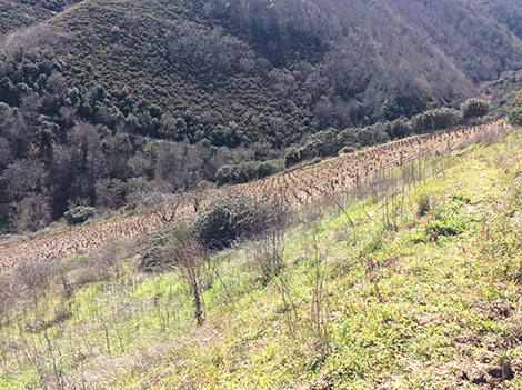 Descendientes J. Palacios spearheads change in Bierzo
