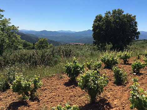 Rufete grapes put Sierra de Salamanca on the wine map