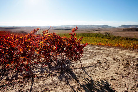A practical glance at Spain's wine regions