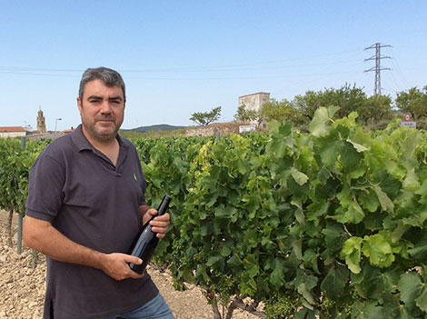 Leading wine producers in Terra Alta