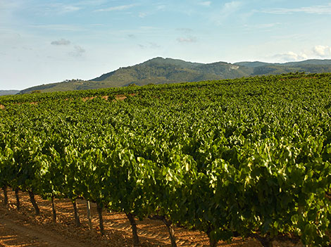 Cava de Paraje Calificado - what's it all about?