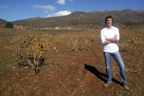 Tenerife wines fall under the spell of the volcano