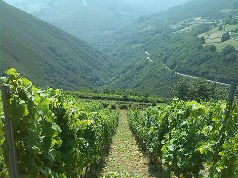 Cangas: from coal mines to fine wines