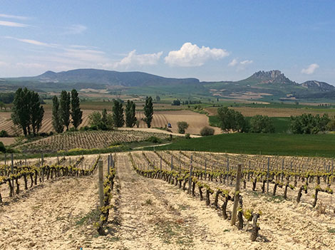 Rioja in the 21st century: styles and categories of wine