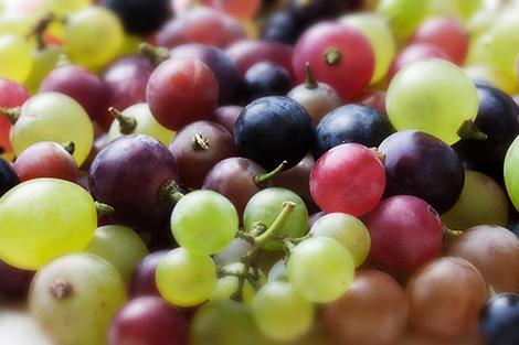 Resultado de imagen para variedades de uvas