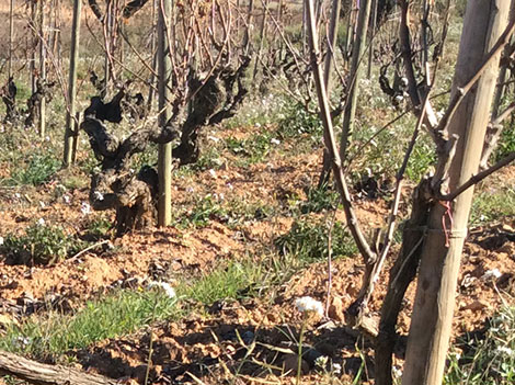 Cava finally linked to terroir with 12 new 'grand cru' sites