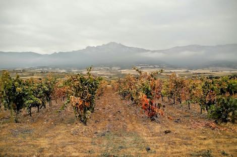 Village wines in Rioja will be based on the location of the winery