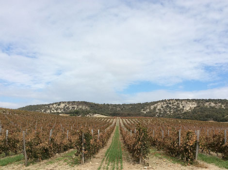 Exploring Ribera del Duero with maps and facts