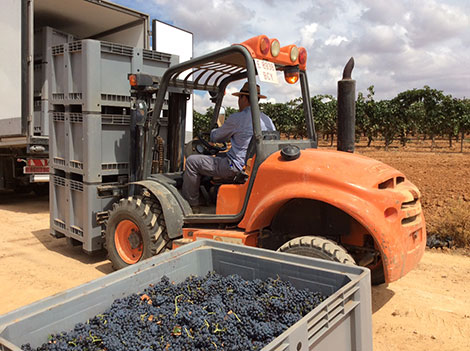 What will the 2017 vintage be like in Spain?
