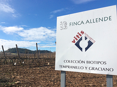 Finca Allende in Rioja rethinks its winegrowing strategy