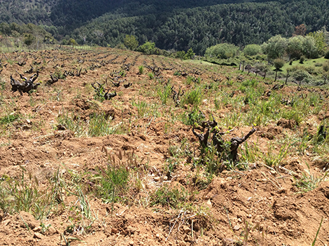 On the trail of minerality with Pedro Parra and Comando G