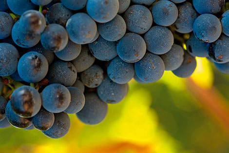 10 great-value reds to celebrate Grenache day