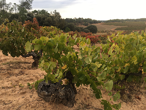 The new faces of Ribera del Duero (I)