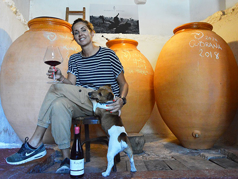 Dogs are winemakers' best friends