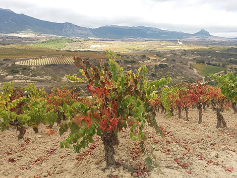 Introducing Rioja's first Viñedos Singulares