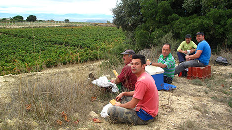 One day picking grapes in Rioja