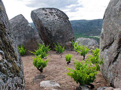 Comando G rescues old Garnacha vines in Gredos