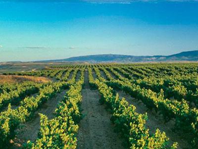 The best wineries across Spain | Spanish Wine Lover