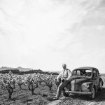 BODEGAS TORRES