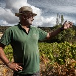 13. Alfonso Chacón (Bodegas Canopy) celebra la singularidad de un viñedo biodinámico que cohabita con helechos y matorral en la zona de El Real de San Vicente (Toledo).